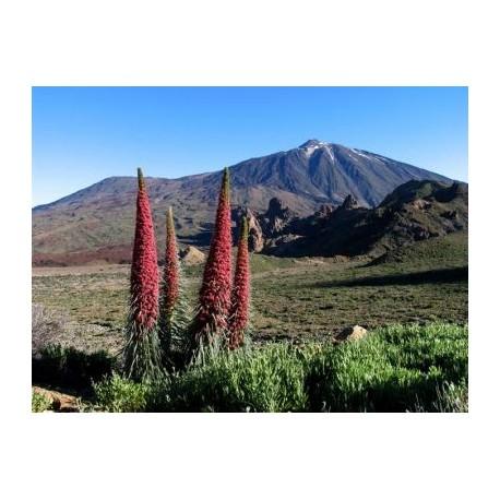 Teide - Masca - Icod de los Vinos - Garachico