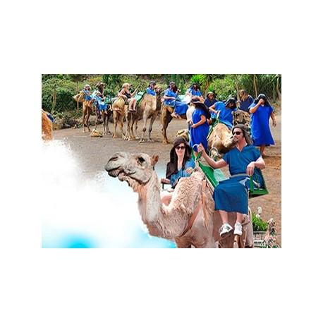 Camellos con bus + paseo + aperitivo